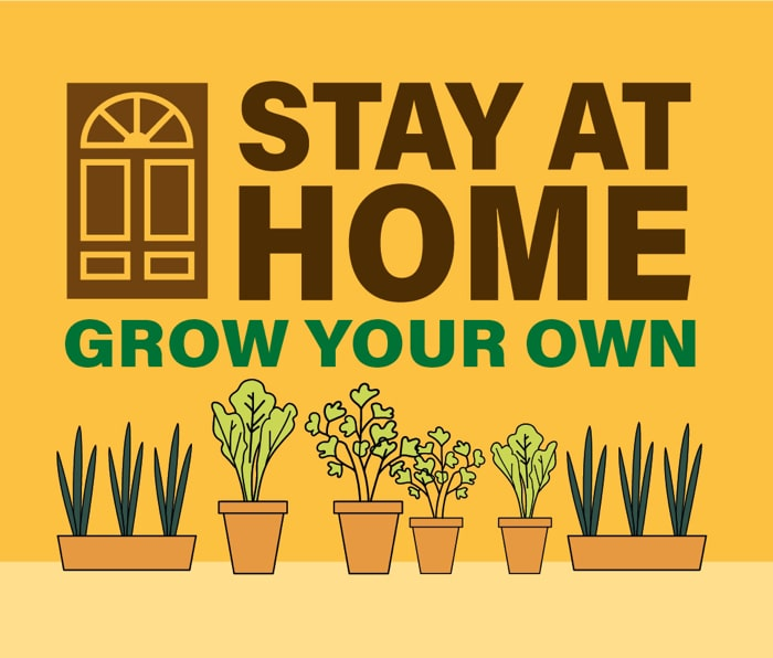 Stay at home, grow your own logo